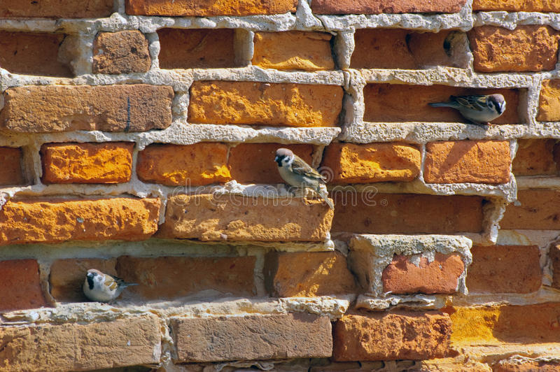 Download Old Brick Wall With Sparrows Stock Image - Image of retro, surface: 24407397