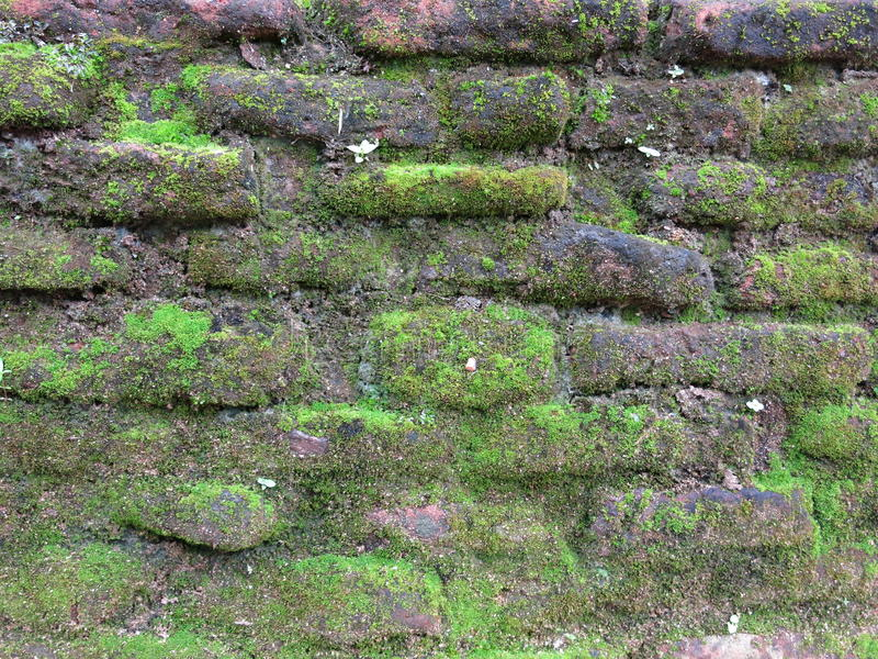 Old brick wall in Srilanka. With moss stock image