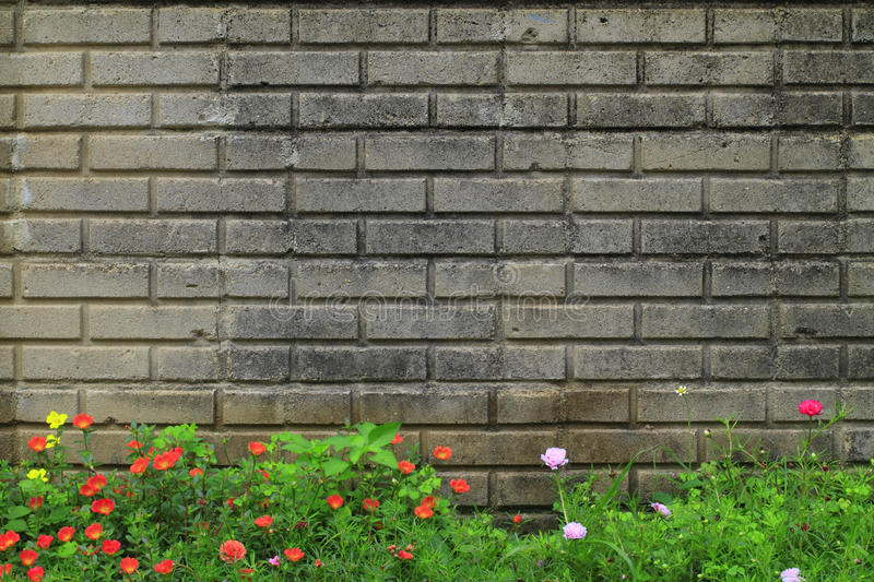 Old brick walls. And flower royalty free stock images