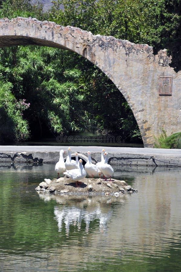 Download Old Bridge stock photo. Image of duck, ducks, landscape - 22682688