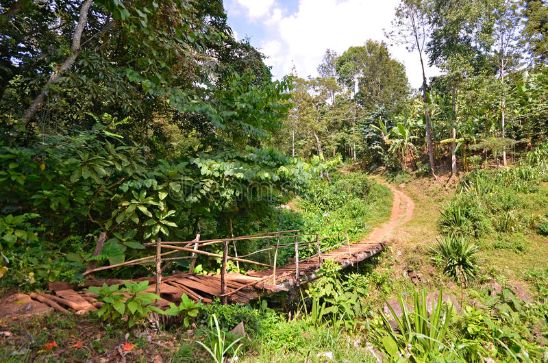 Old Bridge on a walking path in a jungle