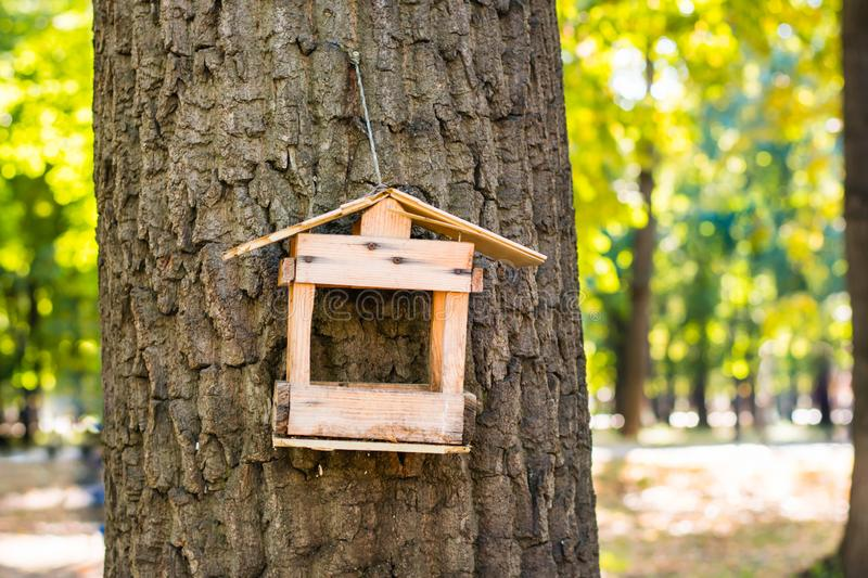 Old broken bird feeder on a tree in the forest royalty free stock photography