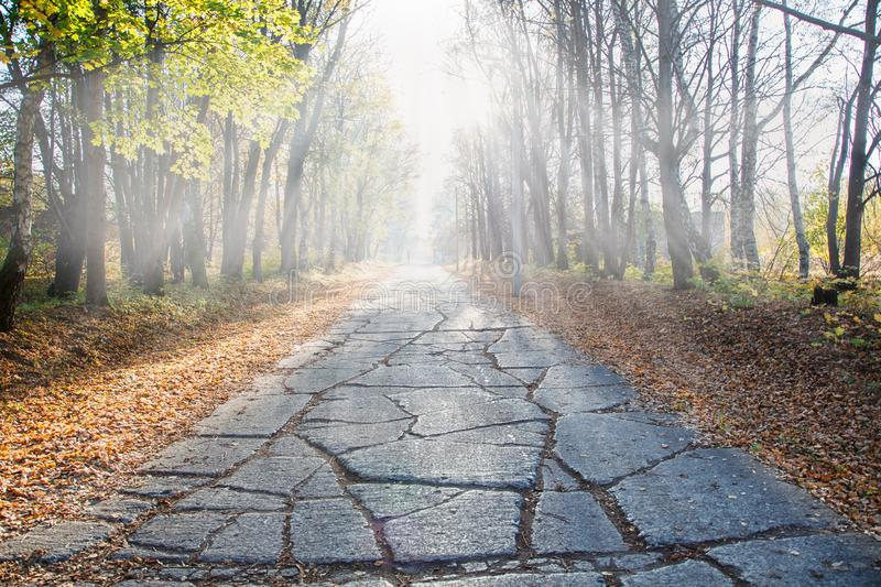 Old broken concrete road on a sunny autumn day stock photos
