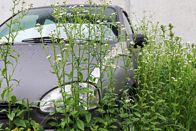 An old broken-down car has been sitting there so long that it`s overgrown with plants stock photos