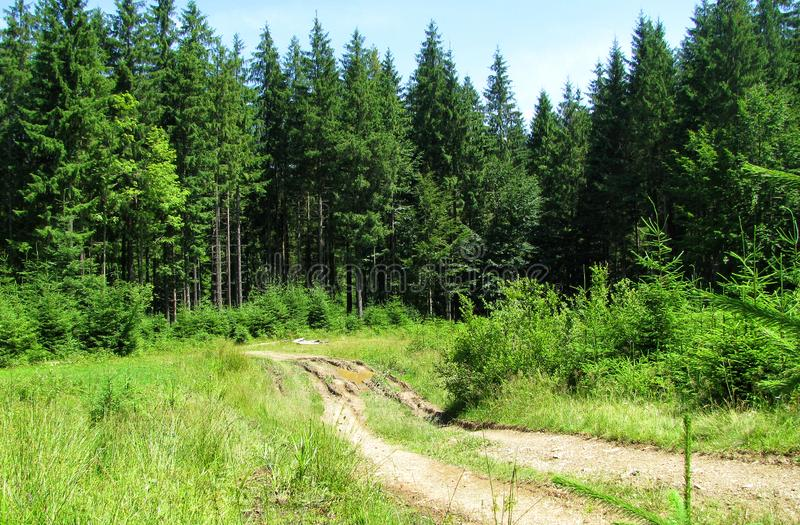 Old broken forest road overlooks sunny meadow stock photo