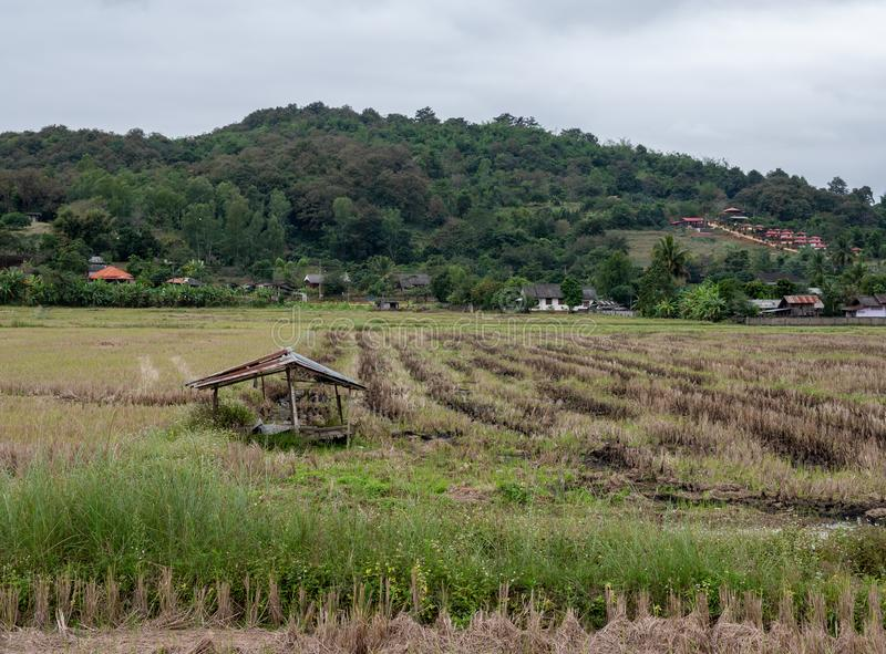 Old broken hut in the paddy field after the harvest stock photography