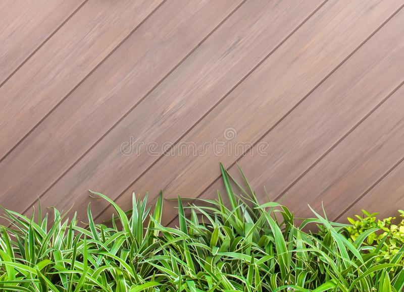 Old brown - gray wooden wall and fresh green leaves background a royalty free stock image