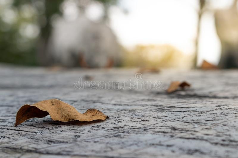 Old brown leaves on the concrete floor. Around with blurry garden background stock images