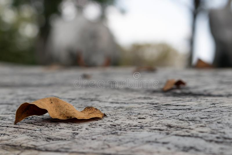 Old brown leaves on the concrete floor. Around with blurry garden background royalty free stock image