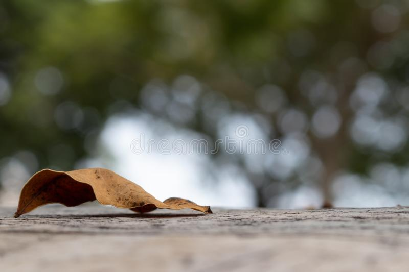 Old brown leaves on the concrete floor. Around with blurry garden background royalty free stock photo