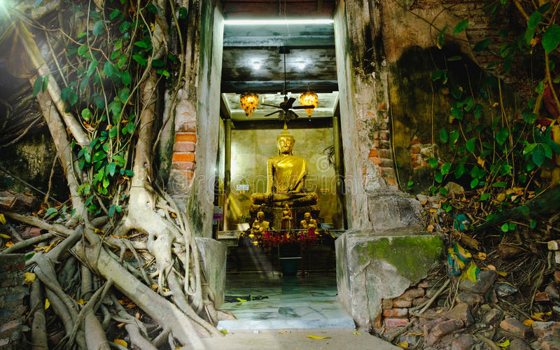 Old Buddha statues in the old church,covered with trees roots with lighting effect. royalty free stock photo