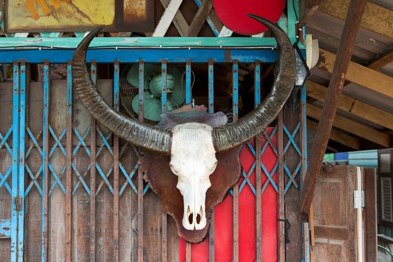 Old Buffalo skull on wooden wall royalty free stock images