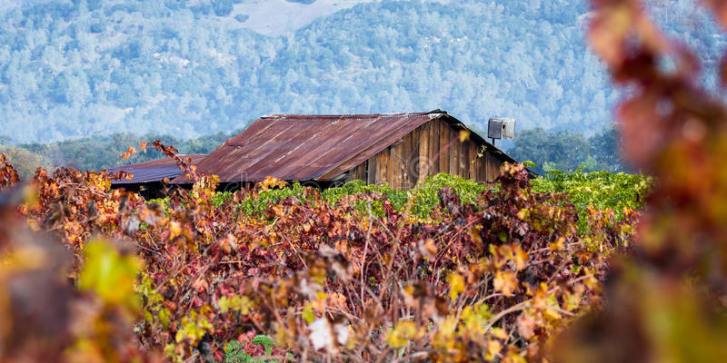 Old building in a colorful vineyard stock image