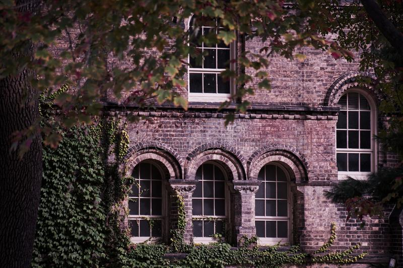 Old building facade made of brick with arch windows and ivy corner seen through trees branches frame.  royalty free stock image