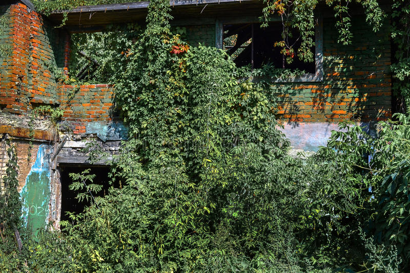 Old burnt house overgrown with plants. stock image