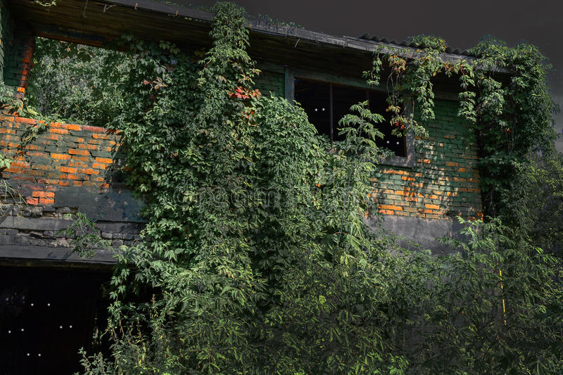 Old burnt house overgrown with plants in the moonlit night. Horror. Eyes in the dark. royalty free stock photo