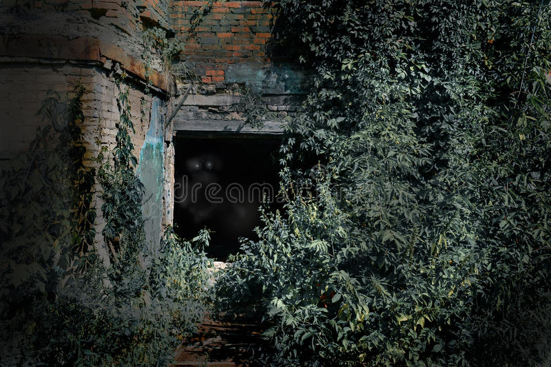 Old burnt house overgrown with plants in the moonlit night. Horror. Eyes in the dark. stock image