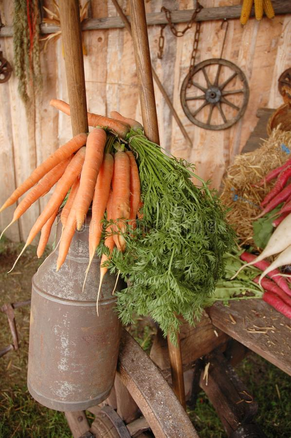 Old canister with carrots on t stock photo