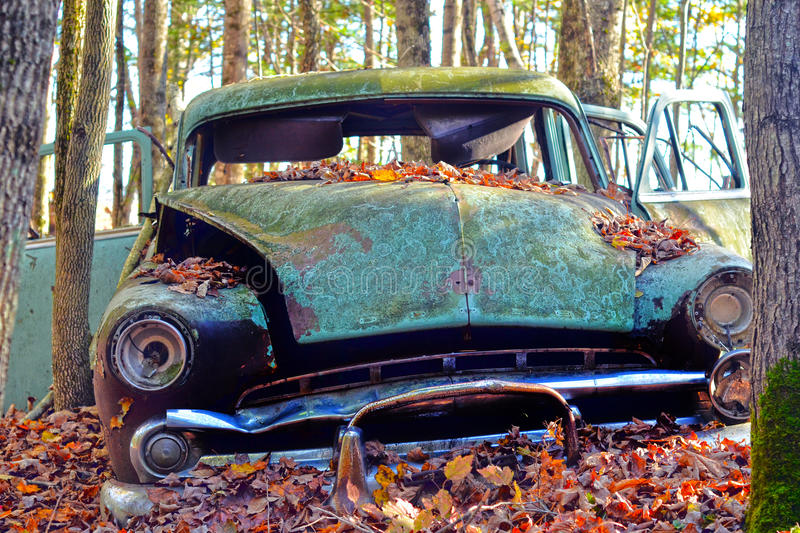 Old Car in the Forest stock photography