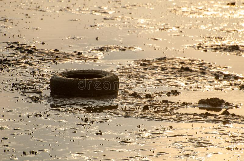 Old car tire at muddy. In morning sunrise stock photo