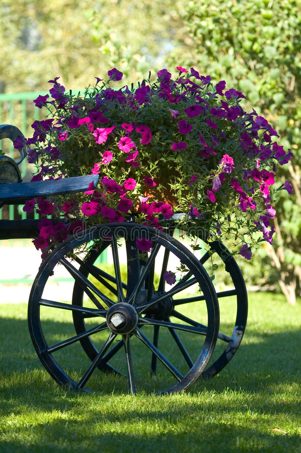 Download Old cart of flowers stock image. Image of spoked, still - 220689