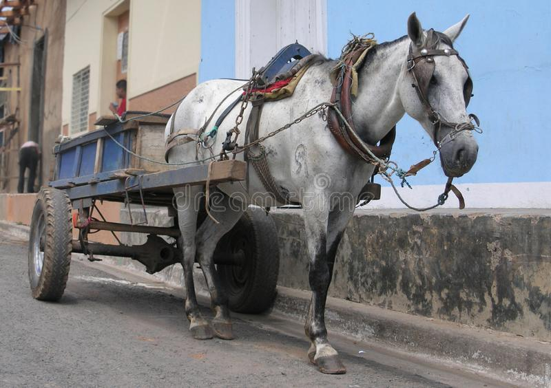 Old cart horse in Nicaragua. Old cart horse in on the street Nicaragua royalty free stock photo