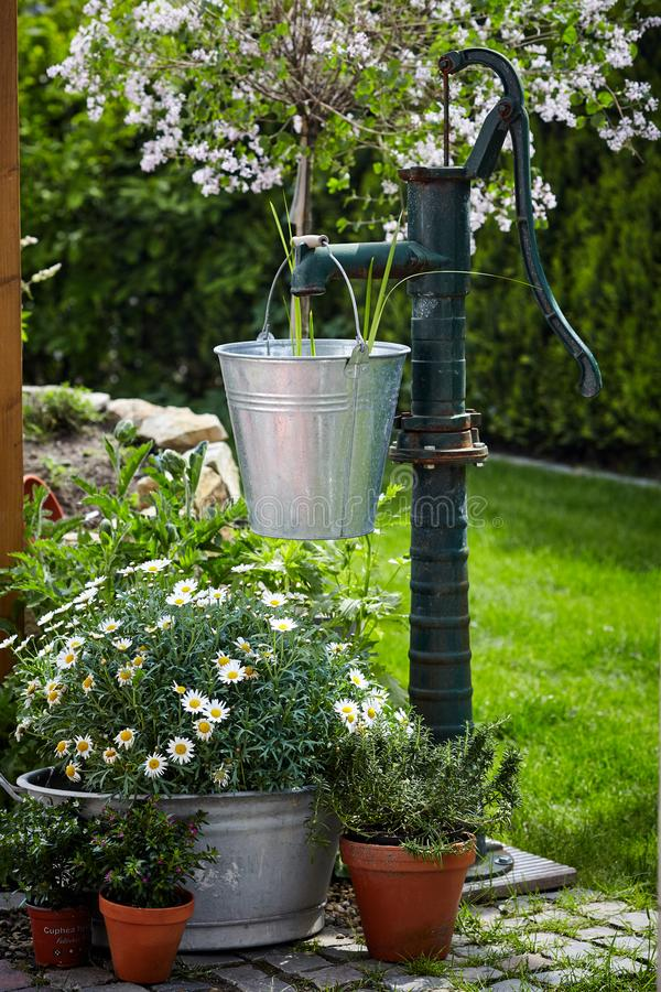 Old cast iron water pump and metal pail. In a lush green garden with white daisies and potted plants in a garden landscaping concept royalty free stock photo