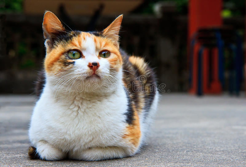 Old Cat In Meditation Royalty Free Stock Photography