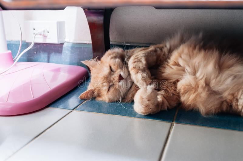 Old cat is sleeping in the evening stock photography