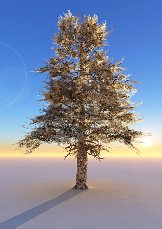 Old cedar tree royalty free illustration