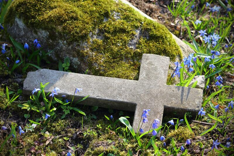 Old cemetery broken cross tombstone with blue spring flowers. On sunny day royalty free stock images