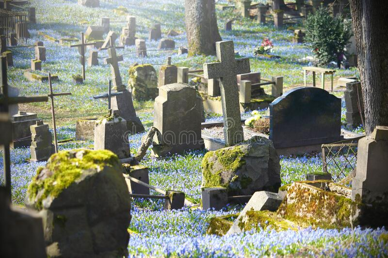 Old cemetery with grave stones and crosses in spring. Old cemetery tombstone in blue spring flowers on sunny day royalty free stock photo