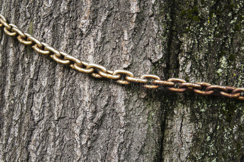 The old chain on the trunk of an old tree, stock images