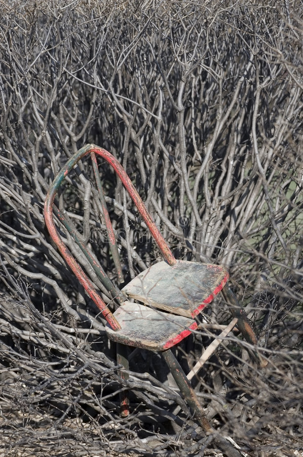 Download Old Chair in Thicket stock image. Image of wooden, derelict - 1814361