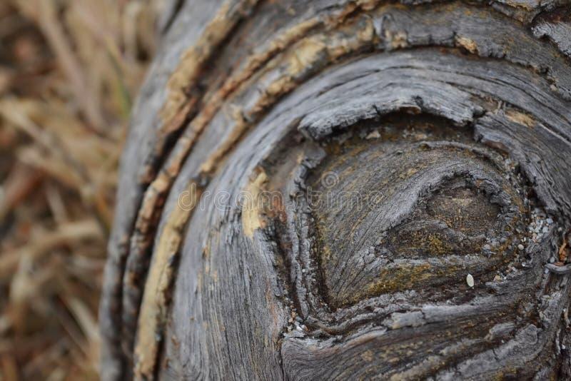An old circular shaped log royalty free stock photography