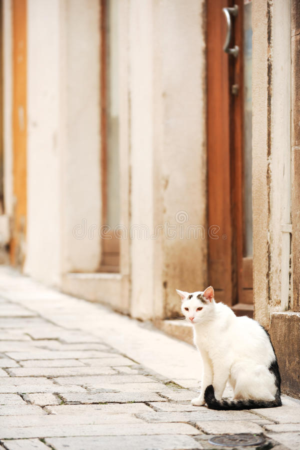 Old city of Sibenik stock images