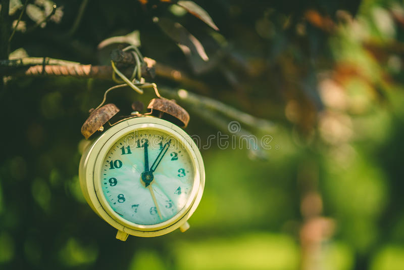 Old clock on a branch stock photo