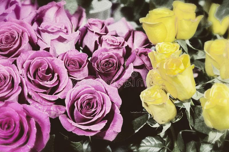 Old color photo of the roses. Old color photo of the lilac and yellow roses stock photography