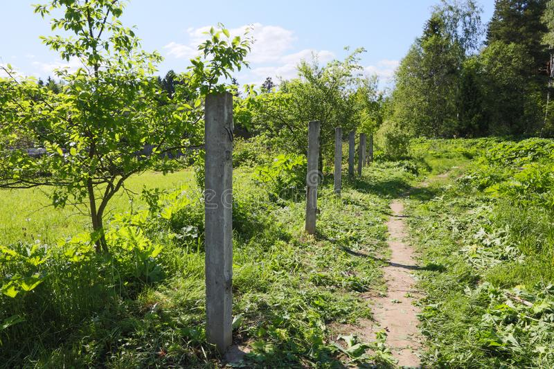 Old concrete pillars from the fence on a summer. Day stock image
