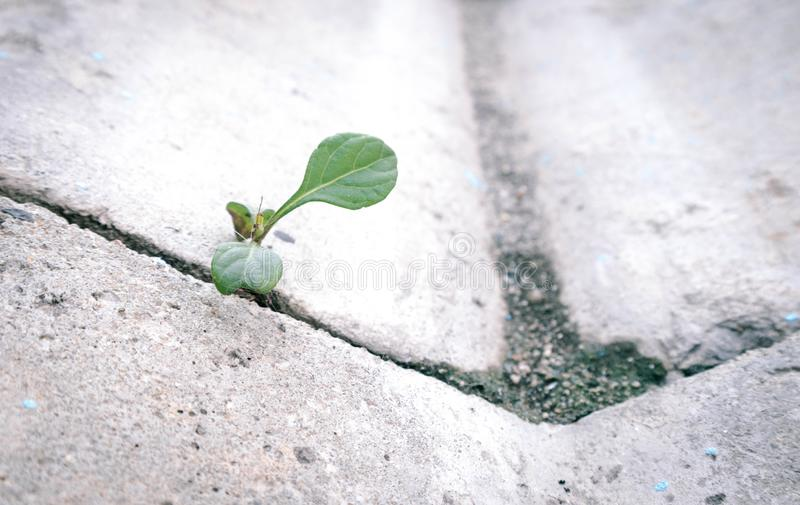 The old concrete road surface in the gutter and weeds that occurred between the gaps in the perch. The old concrete texture road surface in the gutter and weeds stock image