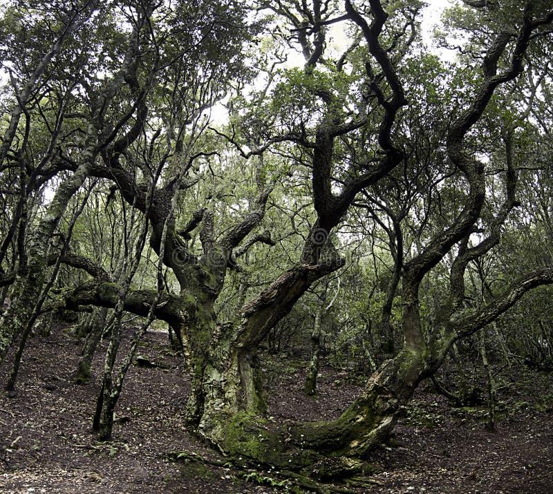 Download The old cork stock image. Image of forest, landsacape - 28684385