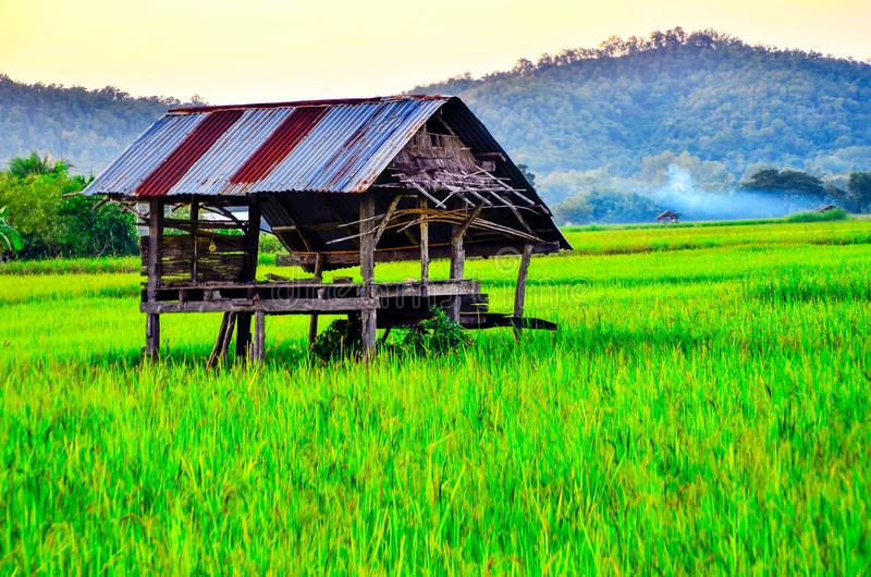 The old cottage is in green rice field on mountain background  at  Thailand. Agriculture, architecture, asia, building, country, cointryside, countryside stock photo
