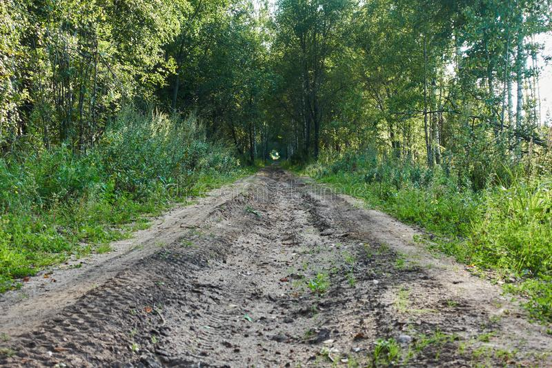 Old country dirt road in the middle of the forest royalty free stock photo