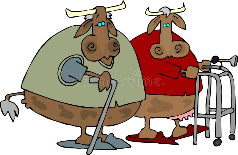 Old Cows Home stock illustration