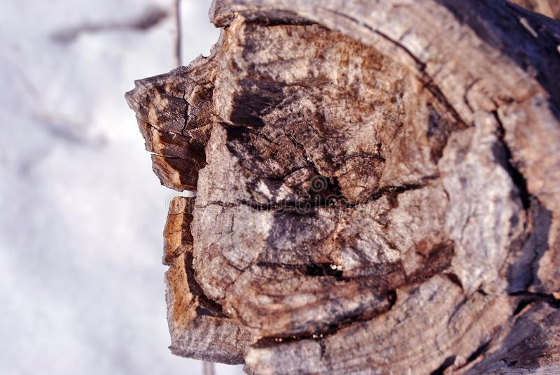 Old cracked tree trunk textured, sawed section top view, cracked from center, brown blurry background, close up. Detail stock images