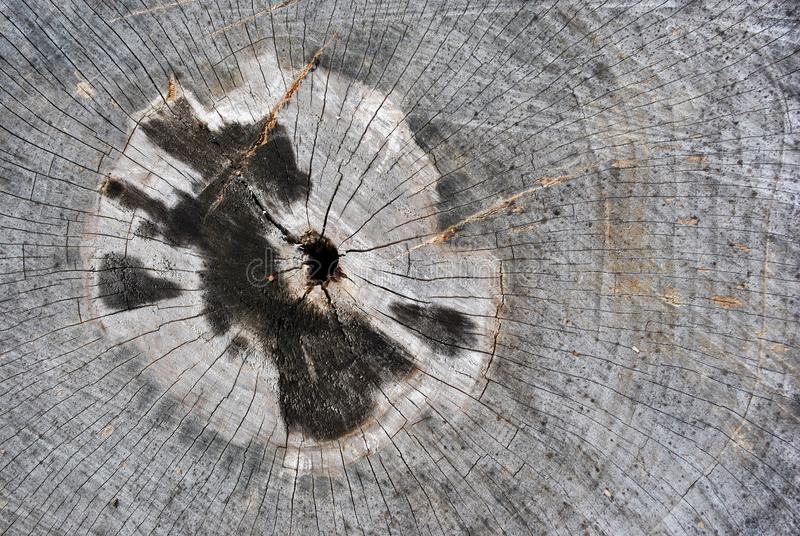 Old cracked tree trunk textured, sawed section top view, cracked from center hole with black burned stains around. Old cracked tree trunk texture, sawed section royalty free stock image