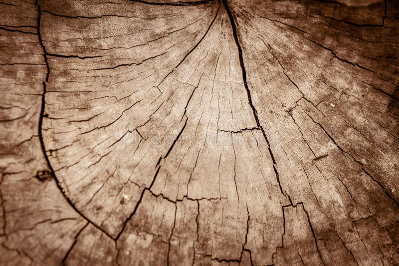 Old cracked wood. royalty free stock images