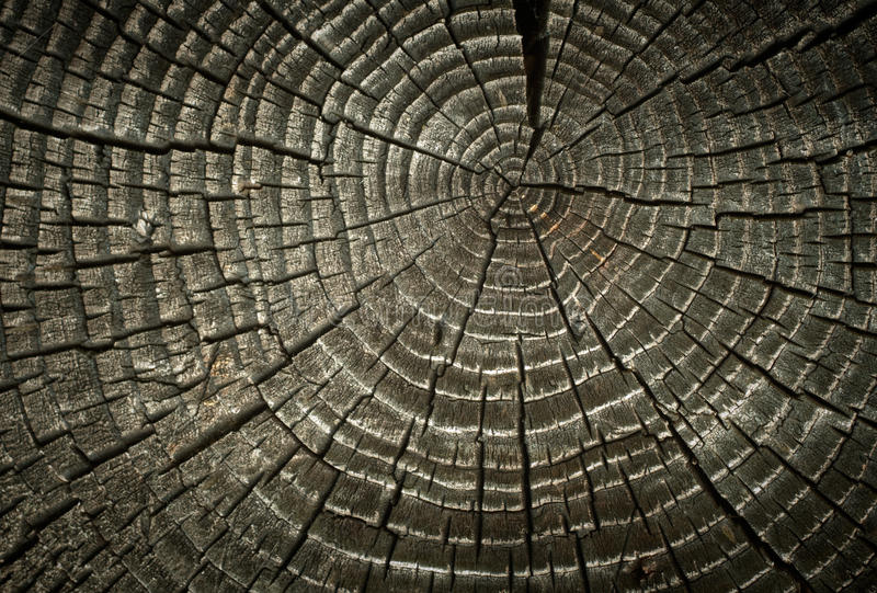 Old cracked wood rings. stock photos