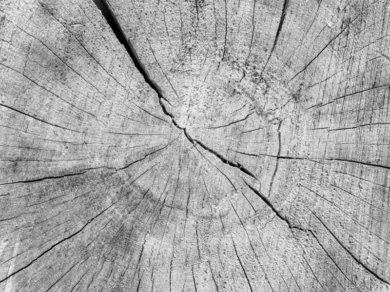 Old cracked wood texture background black and white stock photography