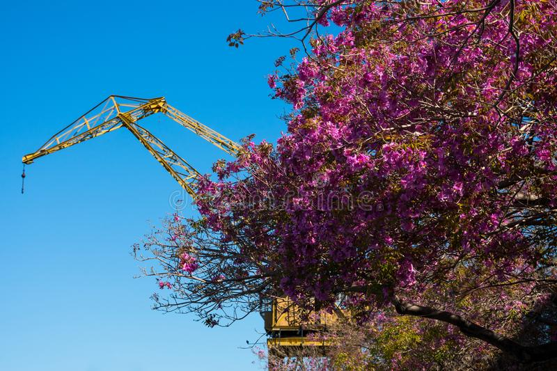 Old crane in Puerto Madero neighborhood. The newest barrio district of Buenos Aires, Argentina royalty free stock photos